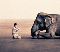 Listening Elephant